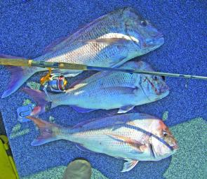 Snapper are still a viable option on the inshore reefs this month.