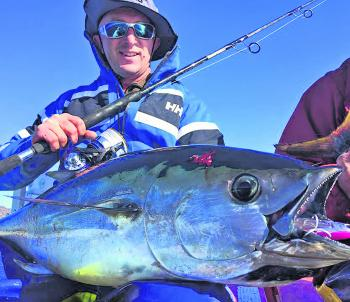 Bluefin tuna have been plentiful, everywhere and very hungry.