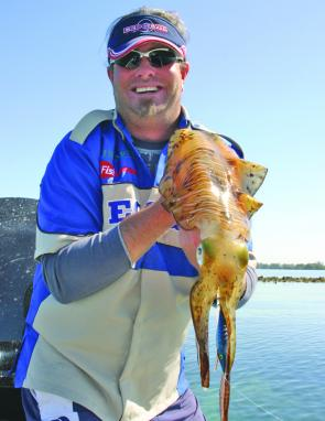 This big bay squid was sight fished in one foot of water around St Helena. It was caught on an Ecogear squid Jig
