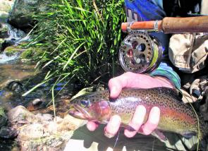This handsome rainbow came from the Styx River. A great trout season ends on June 11.