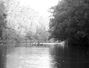 Deeper pools with overhanging trees produce the best results and make for an enjoyable canoe trip!