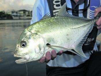 There are still reports of a few trevally being caught.