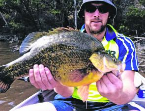 Golden perch are highly active in all regional waterways, including Canberra's urban lakes and Burrinjuck Reservoir.