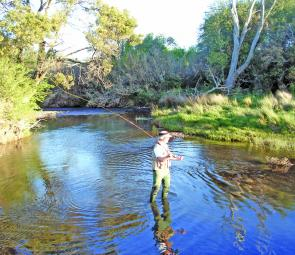 Summer stream paradise – this is northern Tasmanian stream fishing at its best.