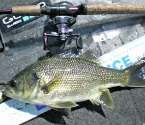 The author caught this St Clair bass by burning a Jackall TN60 across weed tops in around 10m.