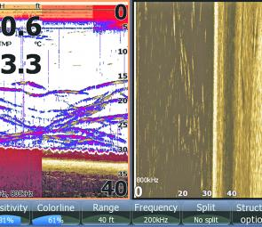 This Structure Scan shot shows bass lurking near a weed edge.
