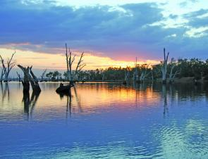 The 2008 Cod Classic will be held in Lake Mulwala and the Murray River on December 6/7.