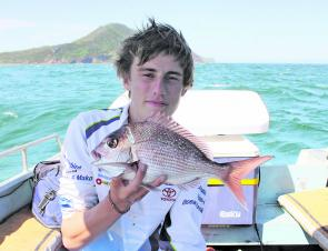 Snapper thrive in warmer conditions.
