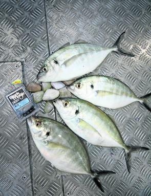 Though silver trevally might be hard to catch, they are a schooling fish and you can expect to catch them in numbers.