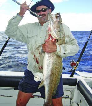The occasional jew will snaffle a bait on the reefs that was meant for a kingie, amberjack or snapper.
