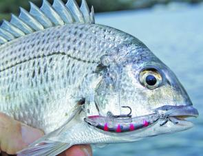 Bream are very nocturnal and will often bite freely at dusk and into the dark.