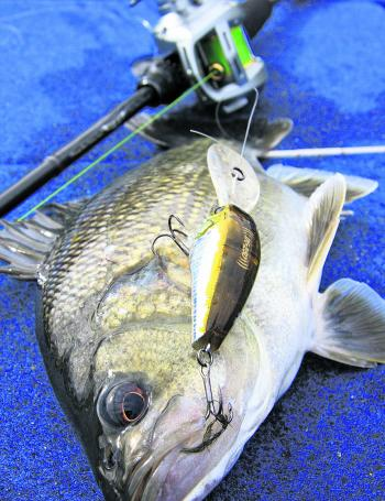 There are few better beginner bass lures than a deep diving crankbait.