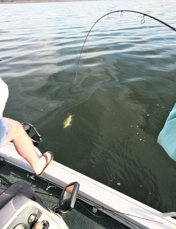 Another deep jigged bass makes its way to the net.