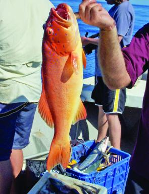 Coral trout are well on the cards this month.