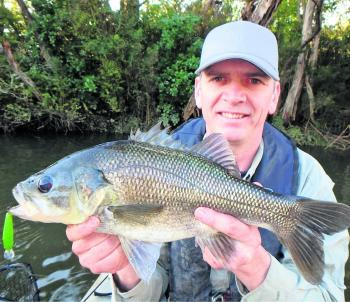 Another trophy wild bass from South Gippsland caught by Mick Selzer.