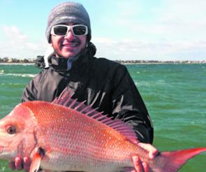 Numbers of quality snapper are on offer for those anglers this October. Best baits have been pilchards and squid.