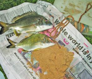 Typical Hunter river bream, these two plate-size models grabbed beach worm baits as if they hadn't eaten for a month. Bream like this are numerous over the next couple of months.