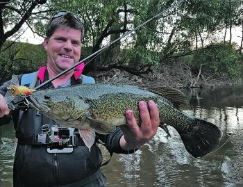 Brett Corker caught this magnificent Murray cod on a Koolabung Codlwaker surface lure near Wangaratta.