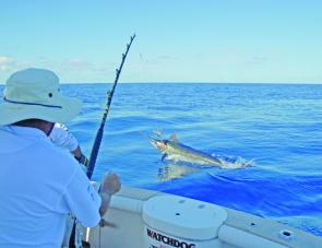 This blue marlin was hooked on the game boat Watchdog and put on a great aerial display.