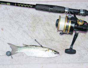 All you need to catch a mulloway.