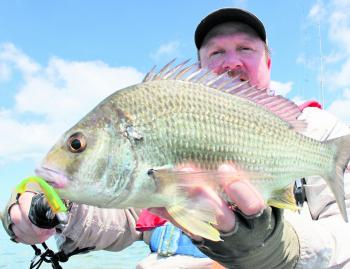 Downsizing your plastic will see bream by-catch increase.