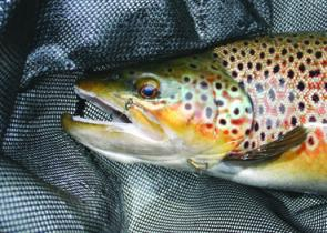 The additional hold the stinger hook has helps keep trout attached when they take to the air.