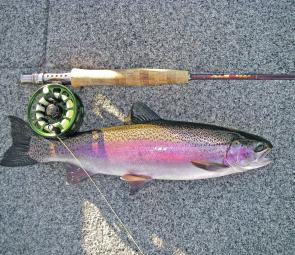 A fighting fit Lake Burbury Rainbow