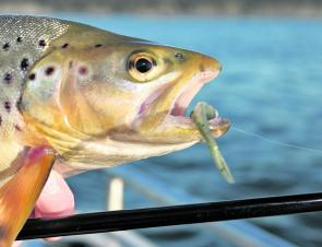Early season trout love soft plastics fished deep and slow.