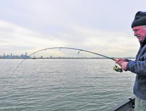 Low light periods at dawn or dusk are preferable, but given favourable conditions snapper will react to a well rigged bait or soft plastic at any time of day.