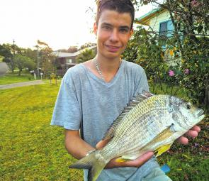 Jason Earl took this bream off the beach on a cooked peeled prawn – he eats three and feeds the fish one! He says the cooked prawns hold better on the hook and make the fish bite harder.
