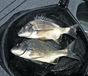 It shouldn't be a problem catching a few bream almost anywhere around the central coast this month.