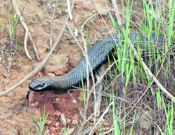 With the warmer weather in September comes increased snake activity. A snake bite in a remote area can become fatal so watch where you put your feet. If you see a snake, leave it alone and you won't have any problems.