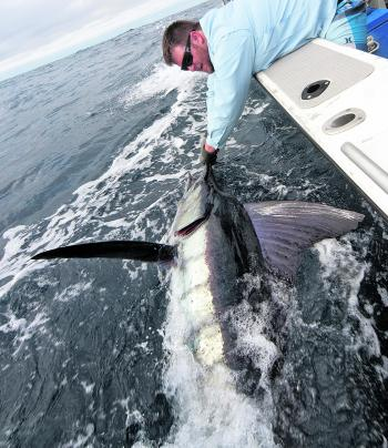 Josh Partridge swims a striped marlin beside Stella II during the Hot Current.