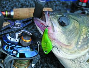 Small lures like the MF40 can tempt tight-lipped bass to bite when the fishing is tough.