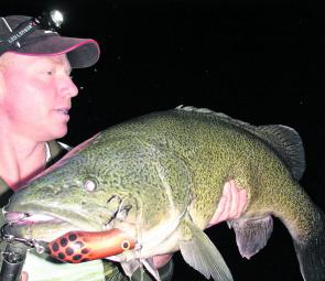 Greg McLeod displays a beautiful Murray cod taken on a Codseeker surface popper.