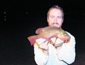 The author with a small mangrove jack from the Richmond River. They get a lot bigger than this!