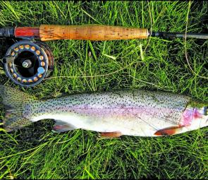 Early season trout are fit and full of fight for New England anglers.