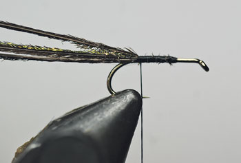Place the hook in the vice and wind to the bend of the hook and tie in 3 long peacock herls.