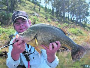 A quality Burrinjuck Dam golden perch is a very sporting catch on light threadline tackle. A 1-2kg Nitro Vapour is the author's weapon of choice when it comes to chasing goldens on lipless crankbaits.