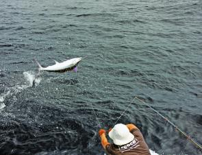 In February marlin should fish well, but be warned: these fish are not for the feint hearted!