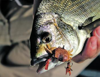 The ever-popular Cranka Crabs have been a hit with bream fishers.