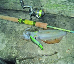 A typical pier squid on my favourite green Dartmax jig – the Yum Yum.