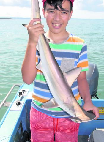 While specific targeting will produce better results on sharks, they are often hooked while targeting other species. Junior anglers are often intrigued by sharks. Remi caught this little hammerhead at the Peel artificial recently.