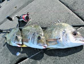 These bream were caught up at the hatch while looking for coloured water.