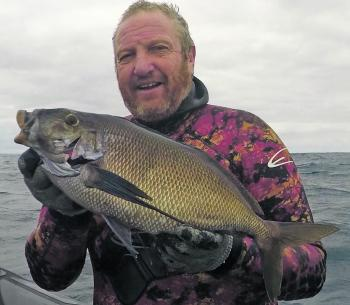 Brett Illinworth of Esclapez Australia with a nice queen snapper – a rare fish for divers in Victoria.