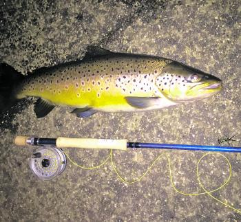 Colby Leskie's magnificent brown trout. Taken by casting Diawa Double Clutch lures at Tullaroop Reservoir