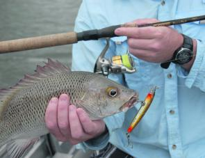 The Baffle Creek system is renowned for sensational mangrove jack fishing.