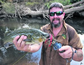 A typically small Murray cod caught in the King River near Wangaratta on a Bassman Yellaman series spinnerbait.
