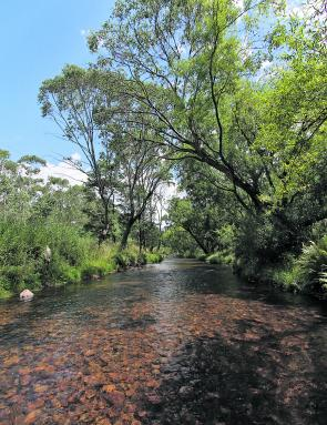 The upper Ovens River around Harrietville is slowly bouncing back after a series of natural disasters decimated the trout stocks in there a few years ago. Trout stocking in the second half of last year has really helped kick start this wonderful fishery.