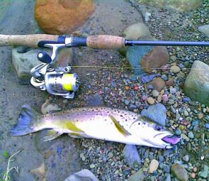 Soft plastics work well on trout – don't be scared to use a bright colour.